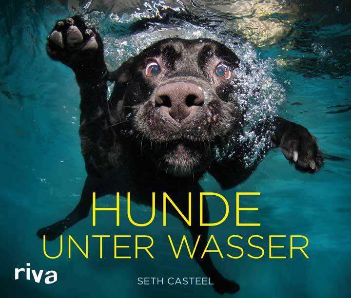 Pitschnasse Pudel: Hunde unter Wasser